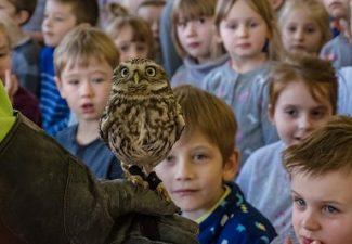 Warsztaty edukacyjne – sowy i sokoły