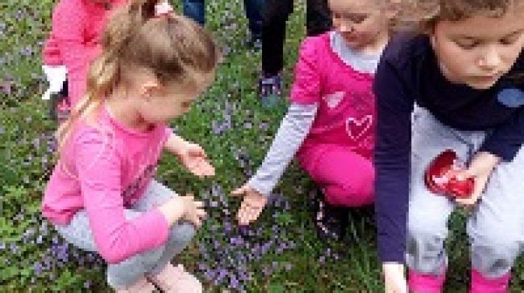 Poznajemy nowe gatunki kwiatów.
