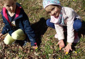 Szukamy zwiastunów wiosny.
